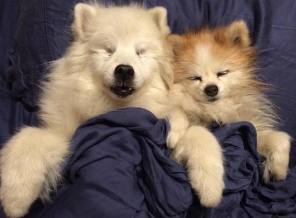 hoshi le chien aveugle qui a son propre un chien guide positiveur. Black Bedroom Furniture Sets. Home Design Ideas